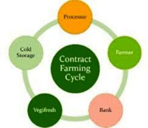 contract-farming-cycle